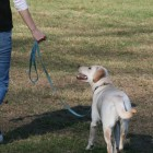 Humane Ways to Teach Your Dog to Walk Nicely on Leash