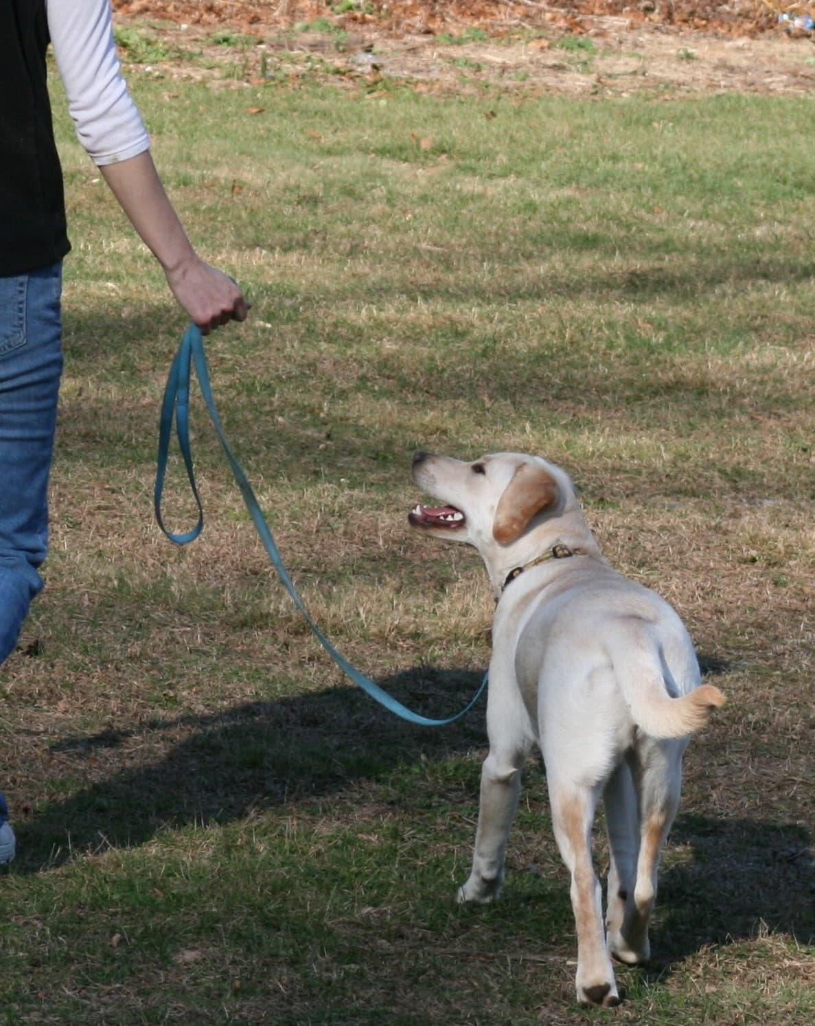 Dog Training Ytourube
