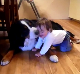 Dog Licks Laughing Baby