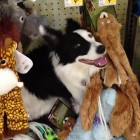 Dog Vandalizes Petco