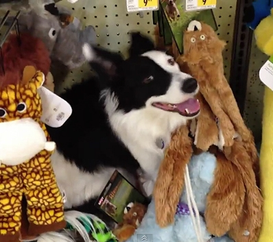 Dog Vandalizes Petco