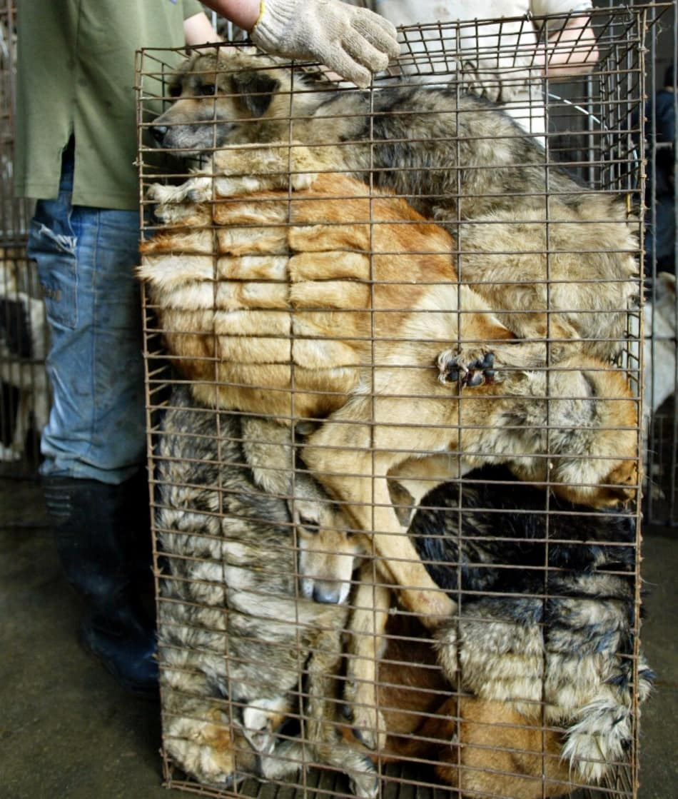 300 Dogs Saved from Thai Smugglers
