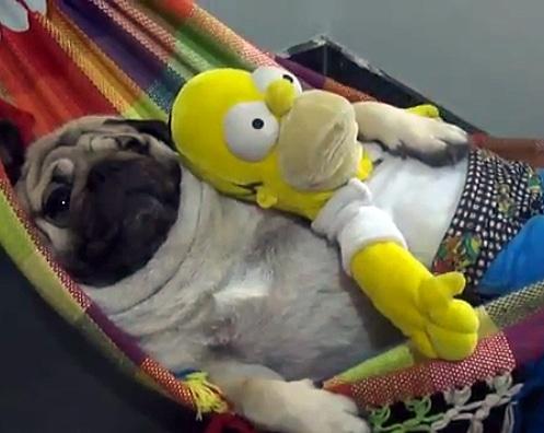 Eddi & Homer Share a Hammock
