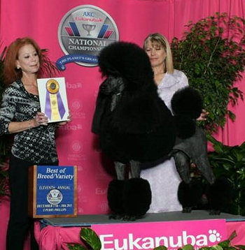 Standard Poodle Wins Best in Show at Eleventh Annual AKC/Eukanuba National Championship