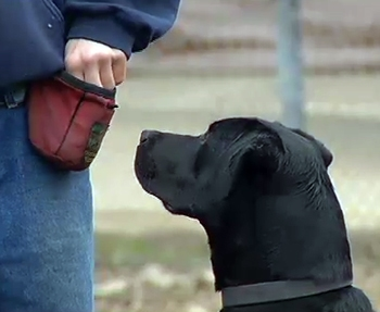 Project Pooch Provides a Second Chance for Man and Dog