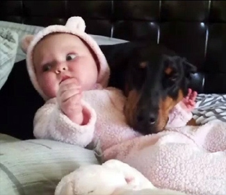 Single Dad Offers Reward: Therapy Dog For Epileptic Baby Stolen, Recovered
