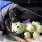 Puppy Dragonslayer