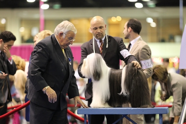 AKC/Eukanuba National Championship to Air on ABC Television Network February 4th