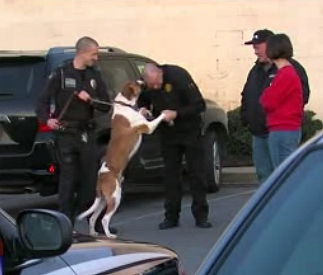 Abandoned Dog Hired by Police Department