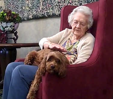 Abandoned Dog Adopted by Nursing Home