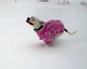 Bindi's Snow Day