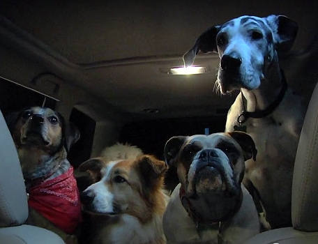 Canine Camping Trip