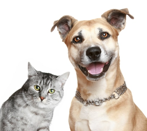 PetSmart Charities Announces $1 Million National Spay/Neuter Grant Program