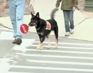 Dog Works as School's Crossing Guard