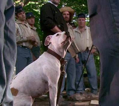 Dog Jack – Official Movie Trailer