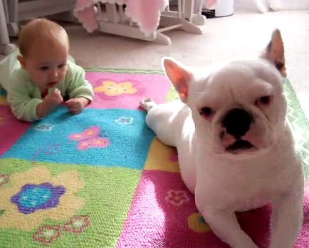 Frenchie Teaches Baby How to Crawl