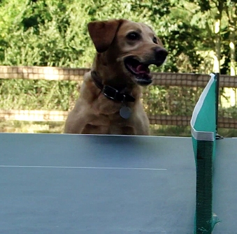 Dog Loves Watching Table Tennis