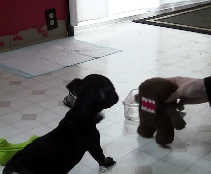 Nibbles vs. Domo
