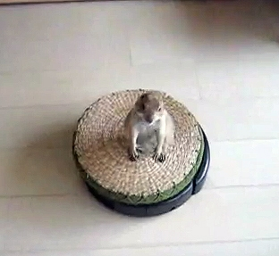 Prairie Dog Roomba Riders