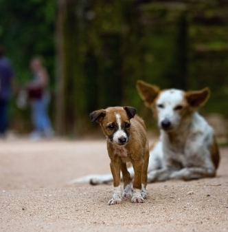 Sri Lanka Prepares to Kill 3 Million Stray Dogs
