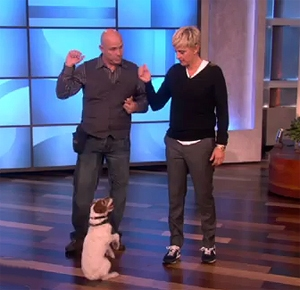 Uggie the Dog Does Tricks for Ellen