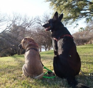 Dog Friendly Must-Do's in Austin