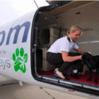 Pet Airways Faces Difficulties