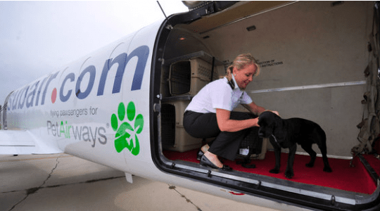 Pet Airways Faces Difficulties