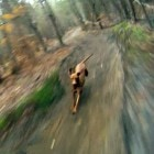The Saturday Pet Blogger Hop: Amber the Dog Loves Downhill Mountain Biking
