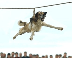 Bulgarian Village Ends Bizarre Practice of Dog Spinning