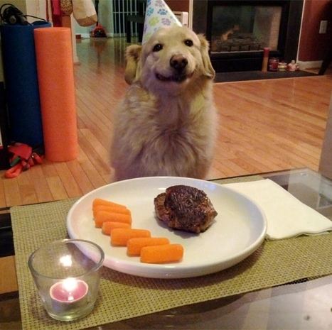 Happy Birthday Dog Smiles On Cue For a Hamburger