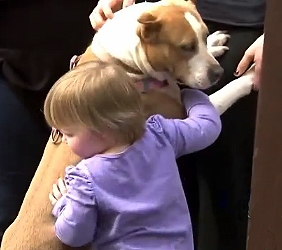 Pit Bulls Helping Kids Trust Again