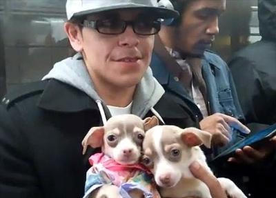 Man Sells Puppies From a Bag on NY Subway