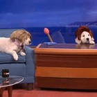 Puppy Conan on TBS