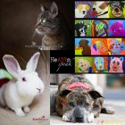 HeARTs Speak: Photographers Focus on Shelter Dogs