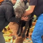 Dog Found Alive Day After Catastrophic House Explosion