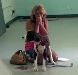 Quadriplegic Springer Spaniel Learns To Walk