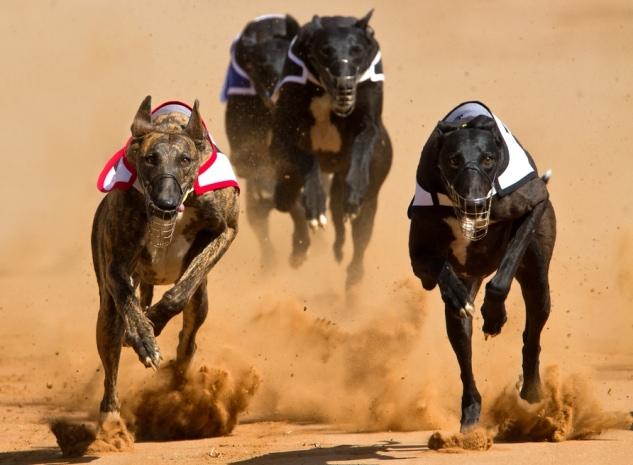Proposal to Close Iowa's Greyhound Tracks Advances in State Senate