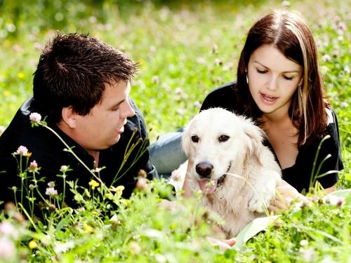 Vermont Senators Propose Pet Death Damages Bill