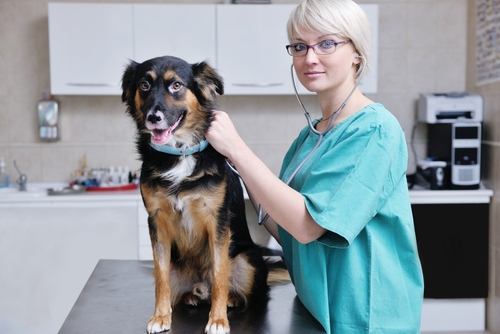 Breakthrough Canine Cancer Research Helps Dogs and Humans Live Longer, Healthier Lives