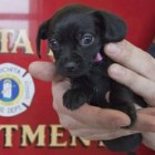 Puppy Finds New Home with the Firefighter Who Rescued Her