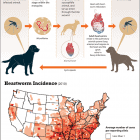 The Dangers of Heartworm Infection – Infographic