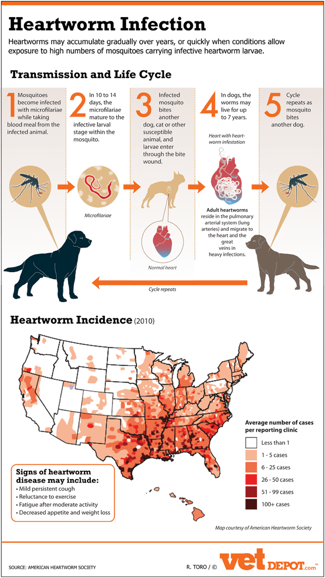 The Dangers Of Heartworm Infection Infographic Life
