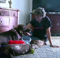 Terminal Cancer Patient Victorious in Fight to Keep Dog