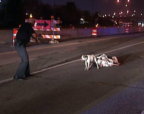 loyal dog loses life protecting injured owner