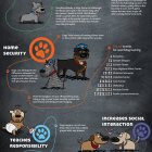 Dogs Are Awesome (INFOGRAPHIC)