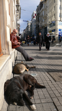 JO_BRUNN_DOGS_AP_001