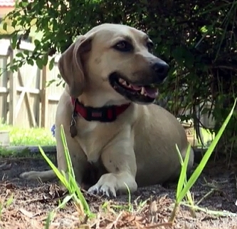 Shelter Dog Saves Teen From Sexual Predator