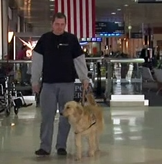 Veteran's Service Dog Prohibited by Employer