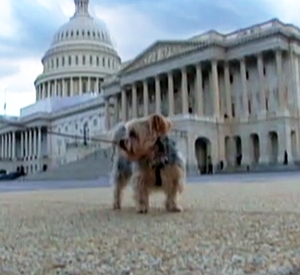 The Canine Insiders of Capitol Hill